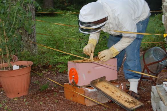 Installing the queen bee