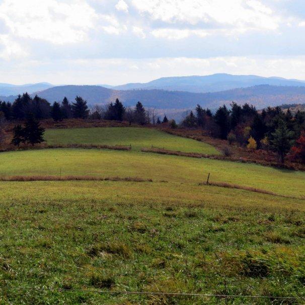4. Meadow