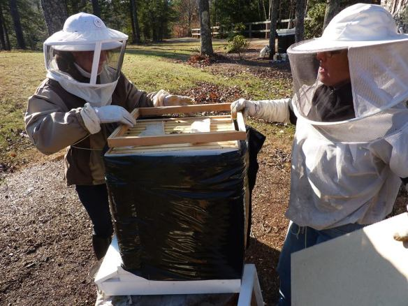 Bees11-23a