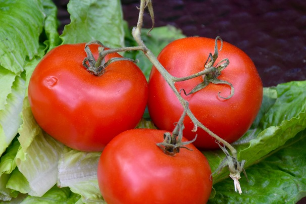 organic tomatoes and lettuce