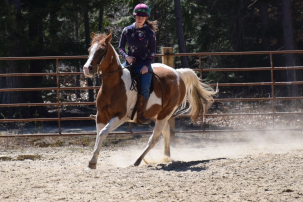 Paint Arab Mare - Tiny Dancer