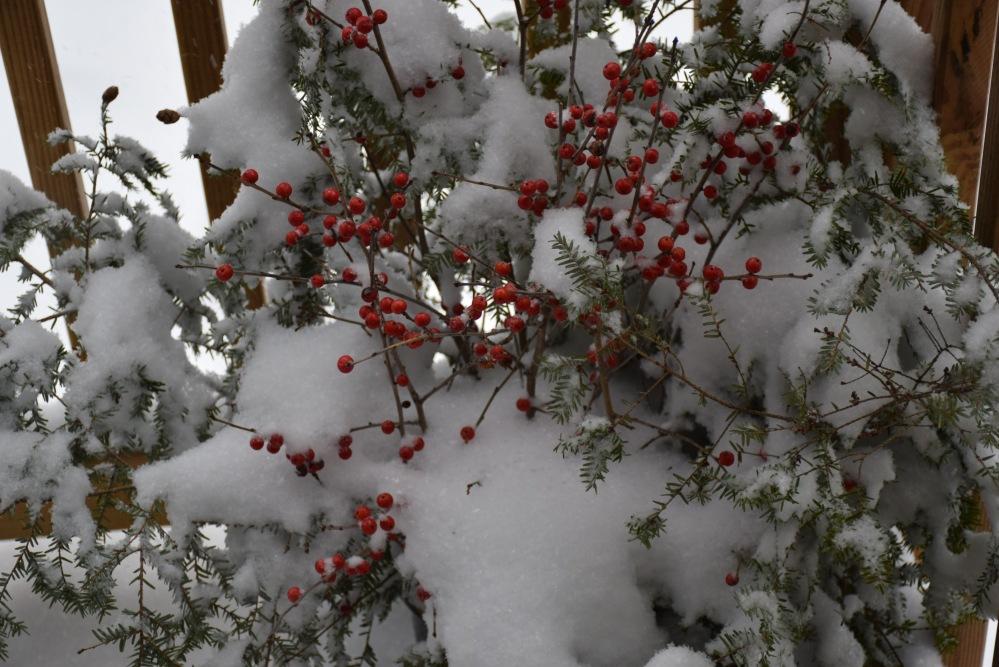 snow on berries,Lake Skatutakee,Harrisville NH,Winter of 2018,Blogging